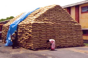 Wheat-stored-in-CAP-storage-(4)